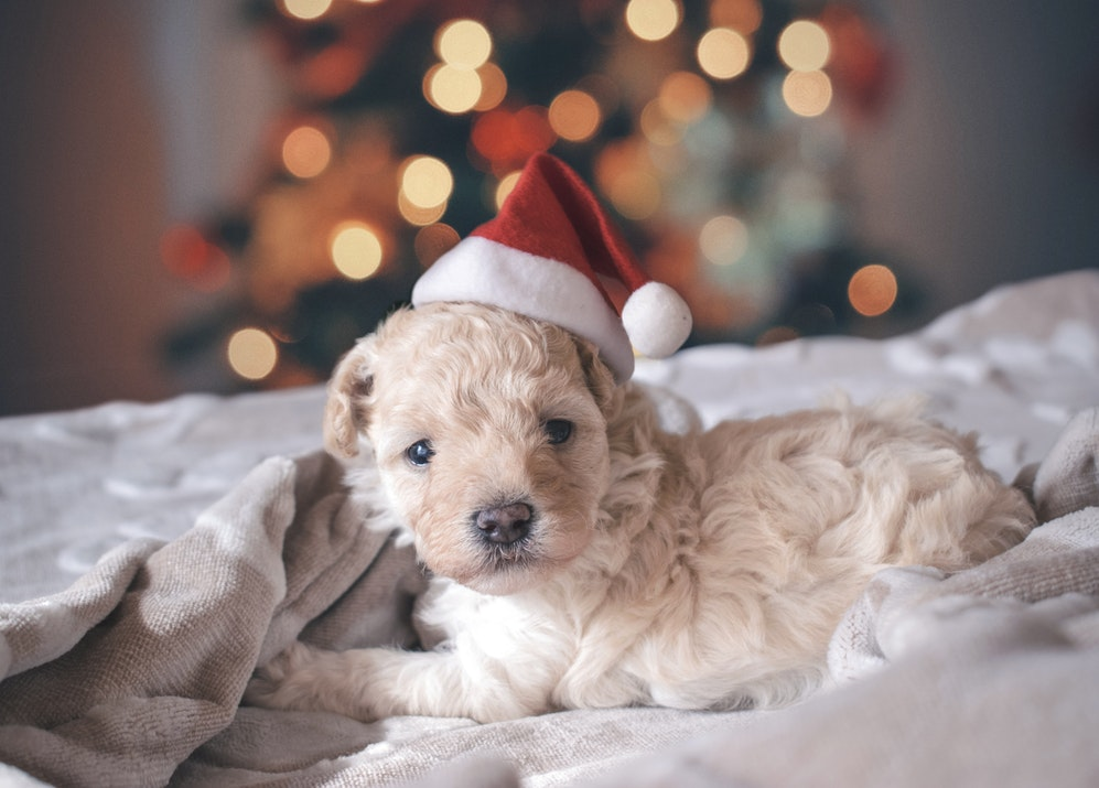 Grown-Up Christmas List Part 3